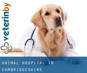 Animal Hospital in Cambridgeshire