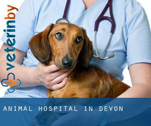 Animal Hospital in Devon