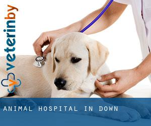 Animal Hospital in Down