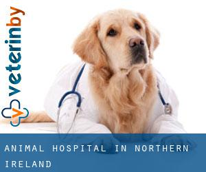 Animal Hospital in Northern Ireland