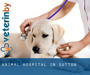 Animal Hospital in Sutton