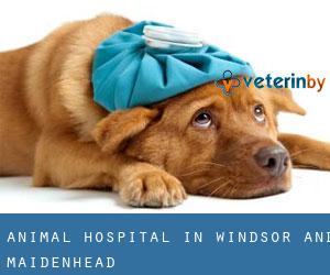 Animal Hospital in Windsor and Maidenhead