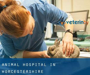Animal Hospital in Worcestershire