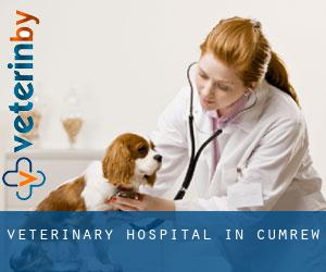 Veterinary Hospital in Cumrew