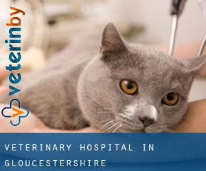 Veterinary Hospital in Gloucestershire
