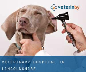 Veterinary Hospital in Lincolnshire