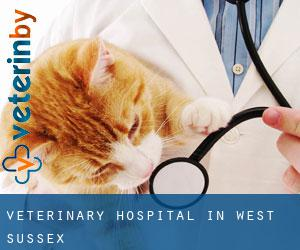 Veterinary Hospital in West Sussex