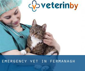 Emergency Vet in Fermanagh