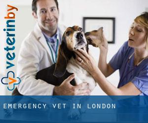 Emergency Vet in London