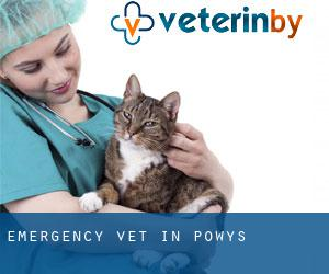 Emergency Vet in Powys
