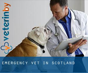 Emergency Vet in Scotland