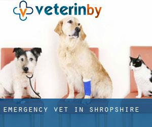 Emergency Vet in Shropshire