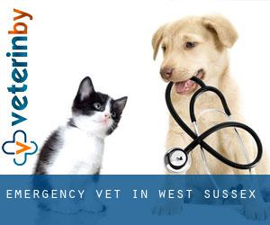 Emergency Vet in West Sussex